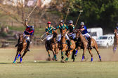 Horse Polo Game Action — Stock Photo