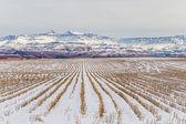 Winter sneeuw boerderij geoogst — Stockfoto