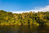 Vegetation On Waters Edge — Stock Photo