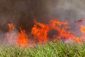 огонь пылающий культур — Стоковое фото