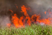 Fire Blazing Crops — Stock Photo