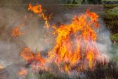 Fire Blazing Crops — Stock Photo