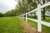 Erba recinto bianco verde — Foto Stock