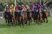 Horse Racing Jockeys Colors Focus — Stockfoto
