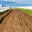 Stock Photo: Race Horse Training Sand Track Venue