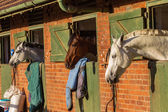 Horses Resting Nationals Stables — Stock Photo