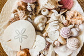 Sea Shells Collection — Stock Photo