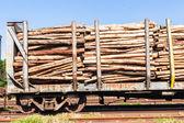 Wood Poles Logging Train — Stock Photo