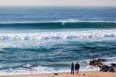 Surfing Ocean Wave Beach People Dogs — Stockfoto