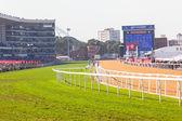Ação de corrida de cavalo — Fotografia Stock