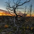 Lonley dead tree in the sunset — Stock Photo