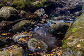 Autumn creak with leavs and slow water — Stock Photo