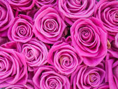 Groupe de roses roses fréquentés — Photo
