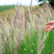 Hand touching a reed grass beautiful scene — Stock Photo #49578617