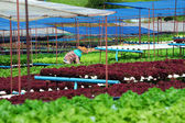 Organic vegetable farms — Stock Photo