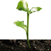 Green sprout in the groun — Stock Photo