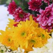 Stock Photo: Chrysanthemam three color