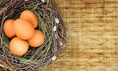 Brown eggs in nest on background with empty space — Stock Photo