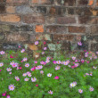 Flowers at a brick wall — Stock Photo