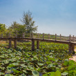 Stock Photo: Wooden bridge over pond with lotuses