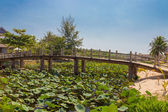 Wooden bridge over a pond with lotuses — Stock Photo