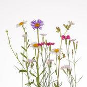 Wildflowers — Stok fotoğraf
