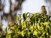 Little bird — Stockfoto