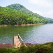 Beautiful natural scene of greenery forest and lake — Stock Photo #38079531