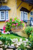 Pink petunia flower hanging basket — Stock Photo