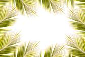 Kokosový listí rám na bílém pozadí — Stock fotografie
