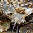 Fresh horseshoe crab — Stock Photo #43690551