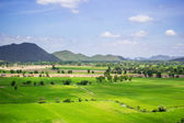 Natural rice field and blue sky at the rural of Thailand. — Stock Photo