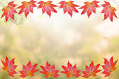 Maple autumn frame and background — Stock Photo