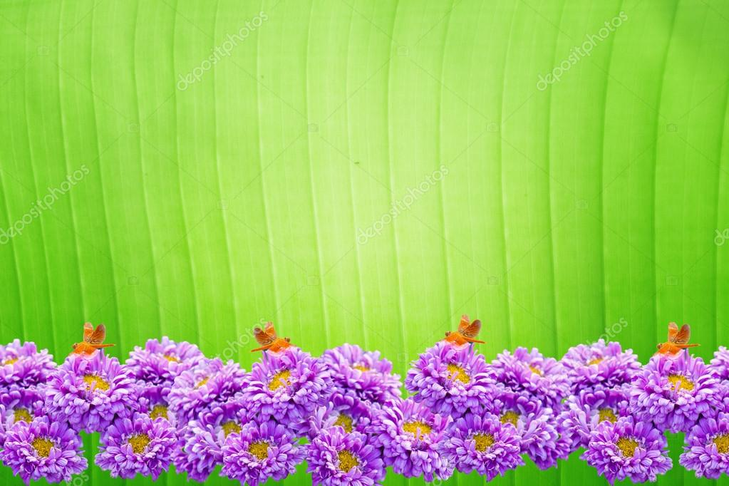 Natural Green Flower Beautiful Violet Chrysanthemum Flower Frame on Green Natural Background