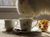Cup of coffee milk and cat — Stock Photo