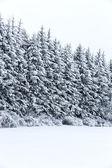 Hiver froid et neigeux — Photo