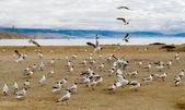 Panorama del lago manasarovar. tíbet — Foto de Stock