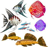 Set of different freshwater aquarium fishes — Stock Vector
