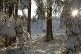 Winter in forest — Stock Photo