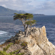 Lone Cypress Tree on Monterey Peninsula — Photo
