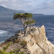 Lone Cypress Tree on Monterey Peninsula — Stockfoto