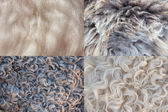 Sheepskin background — Stock Photo