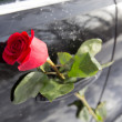Red rose — Stock Photo #40024711