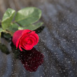 Red rose — Stock Photo #40024725