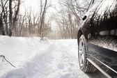 Bil i skogen — Stockfoto