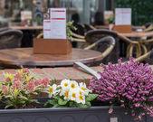 Bir kafede güzel çiçekler — Stok fotoğraf