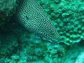 Underwater photo big Pike — Stock Photo