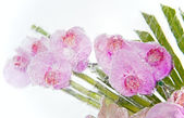 Frozen pink orchid bouquet inside the ice block — Stock Photo
