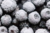 Hoarfrost on bilberries — Stock Photo