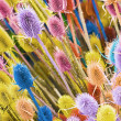 Colorful thistle — Stock Photo